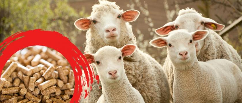 Koyun Süt Yemi